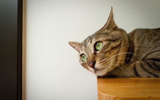 cat funny photos