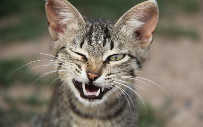 cat funny wink