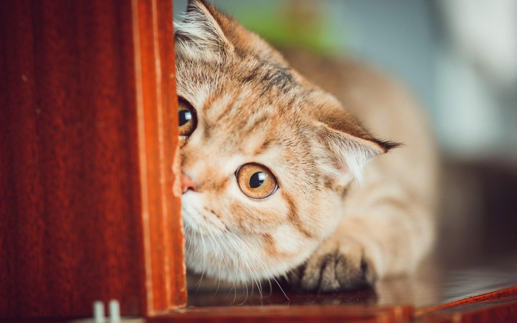 cat funny - HD Desktop Wallpapers | 4k HD