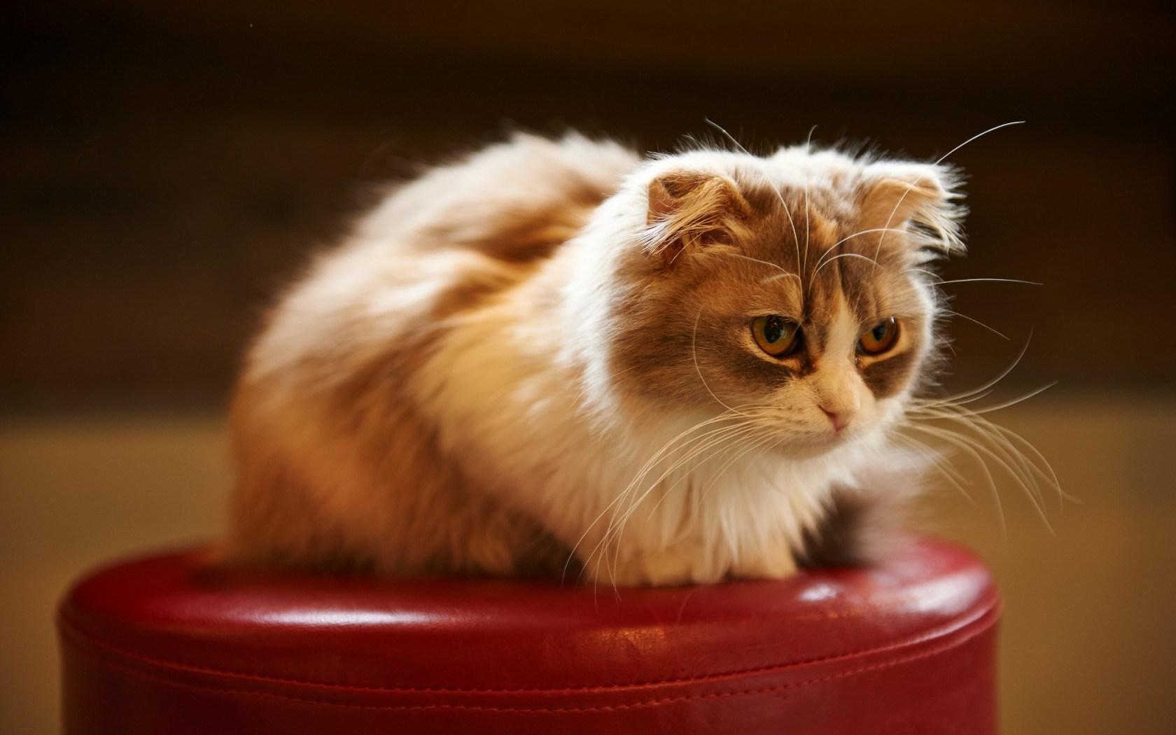 cat images cute