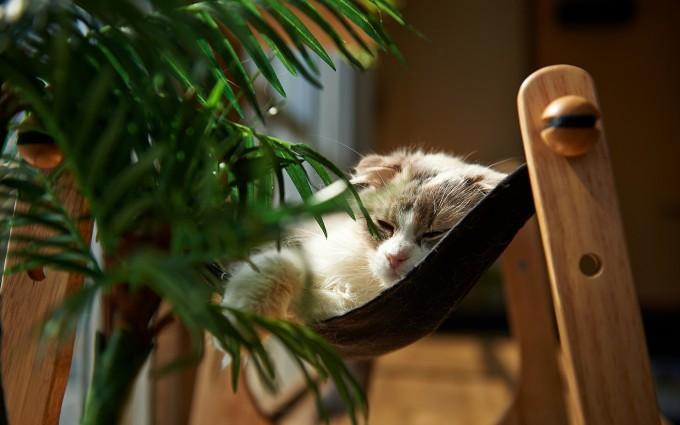 cat mobile iphone