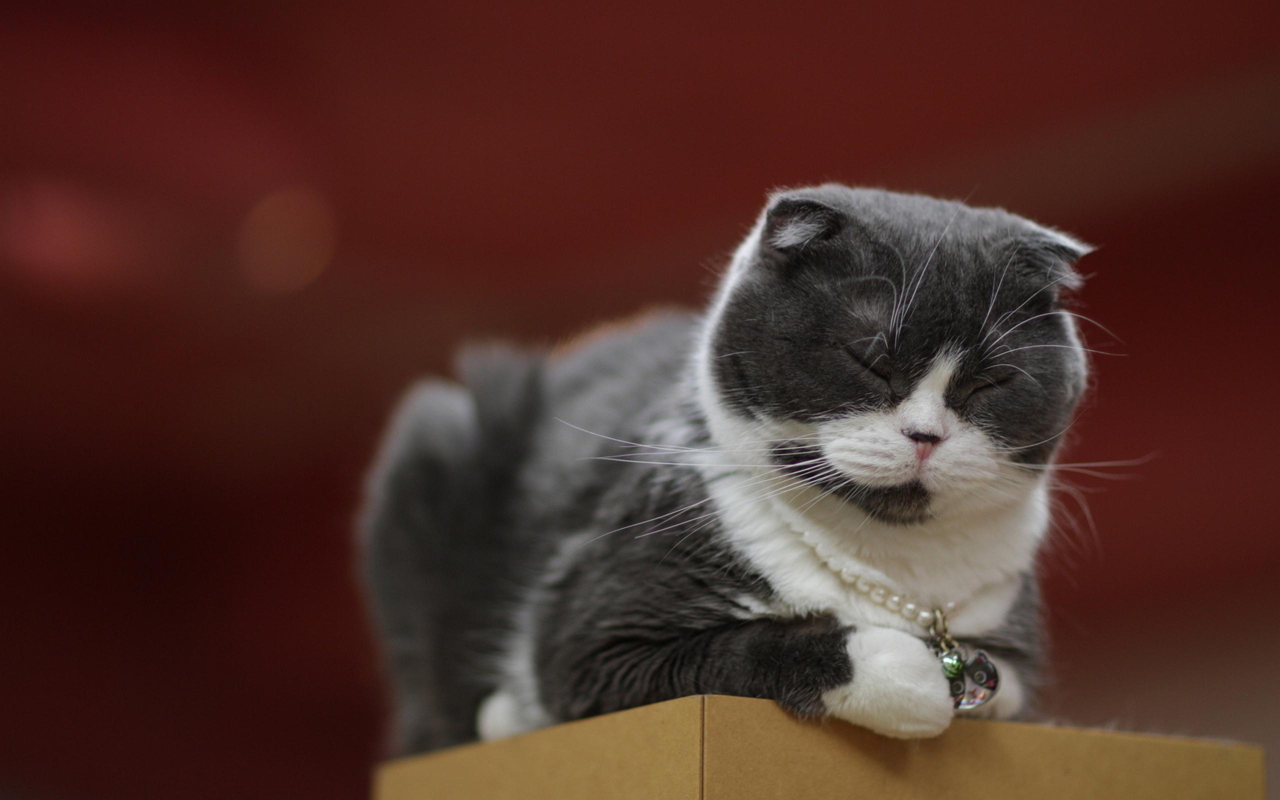 cat nap hd