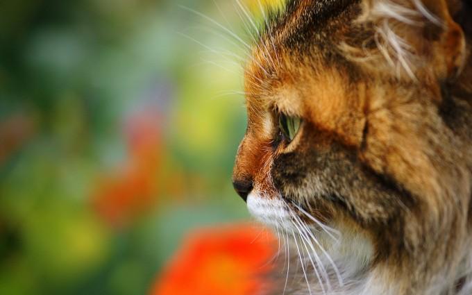 cat serious