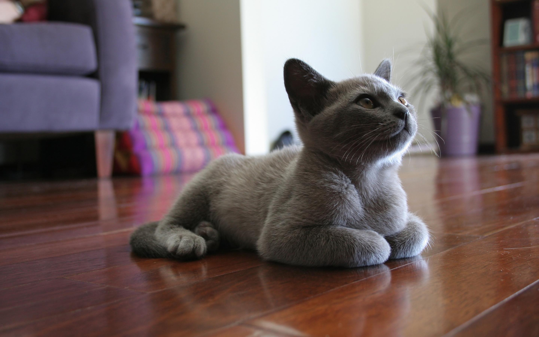 cat sitting mobile