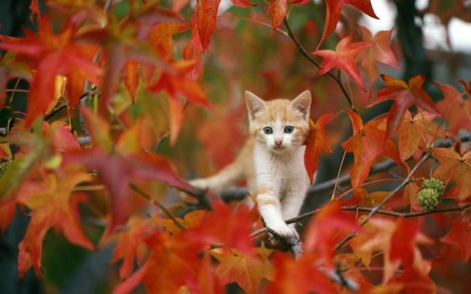 cat sitting on tree