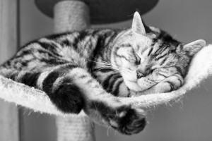 cat sleeping cute