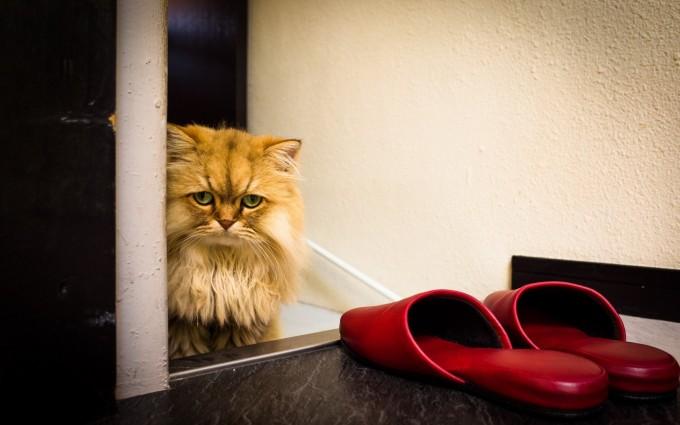 cat splendid