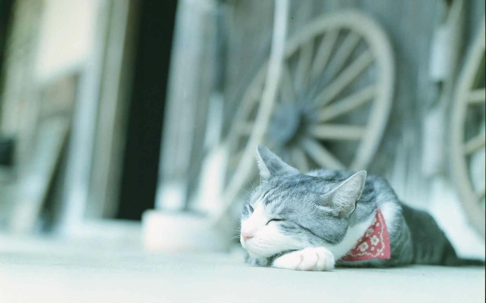 cat sweet laptop download