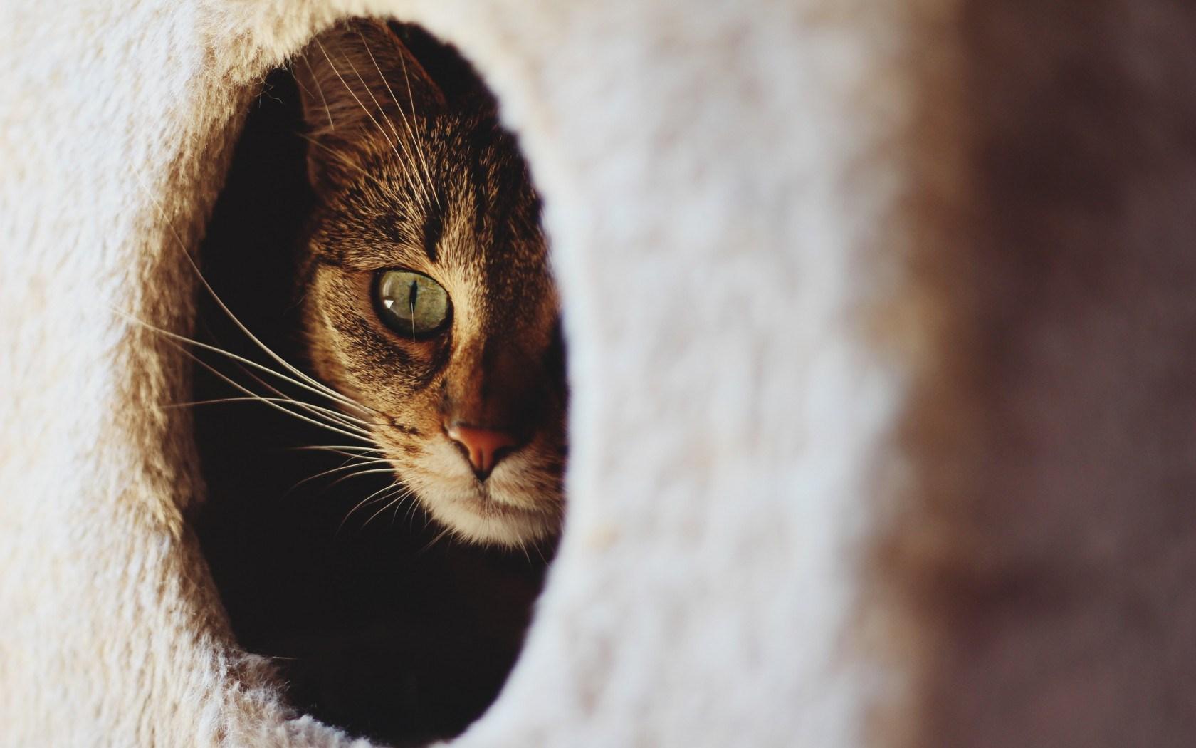 cat sweet