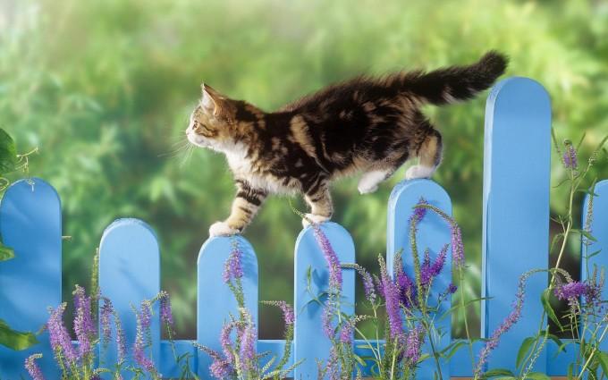 cat walking fence