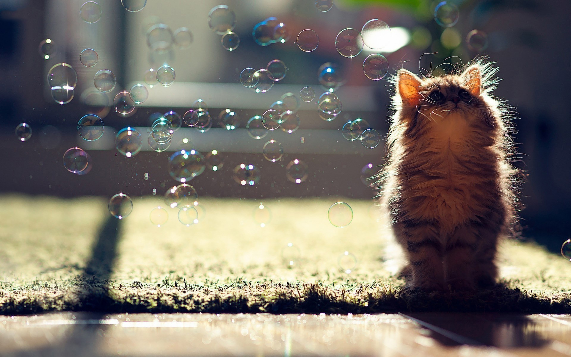 cat wallpaper desktop
