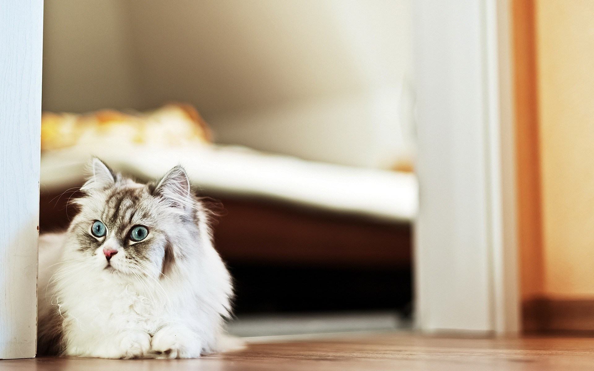 cat white pc download