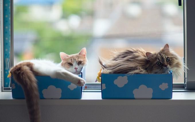cats couple