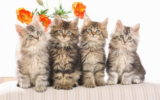 cats funny family