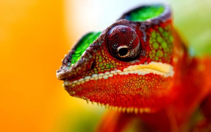 chameleon cute