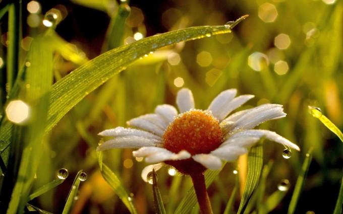 chamomile wet romantic
