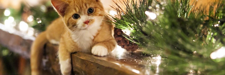 christmas cat hd desktop wallpapers 4k hd