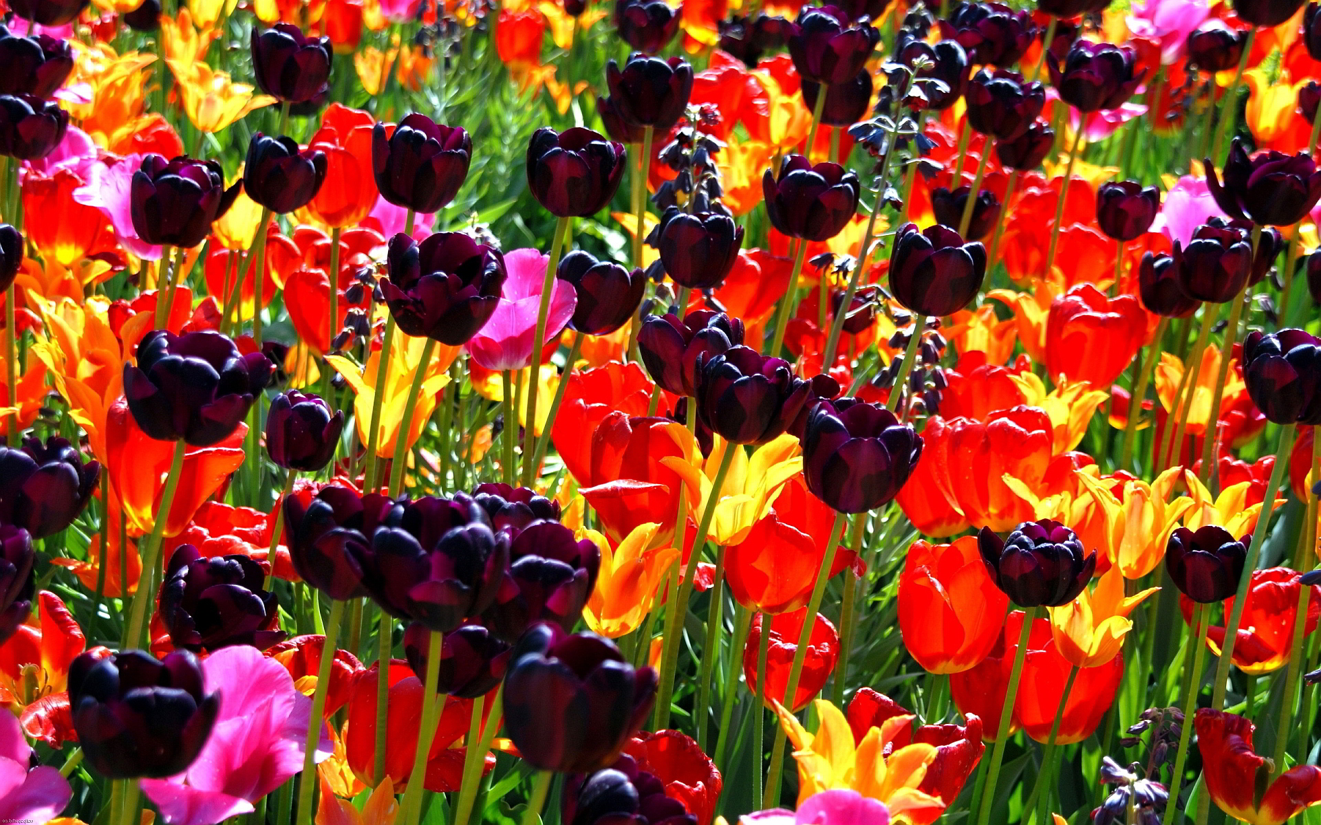 colourful flowers wallpaper 1280x1024