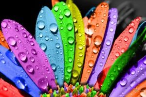 colorful flower petals