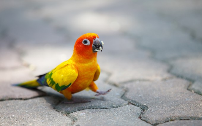 colorful parrot wallpaper