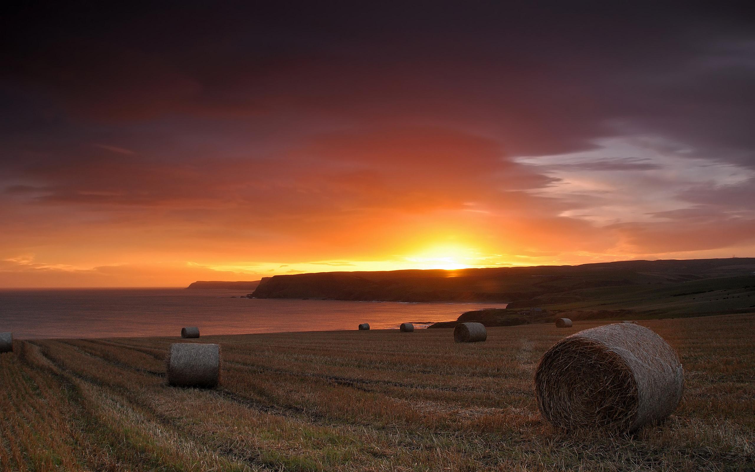 cornfield sunset lanscape