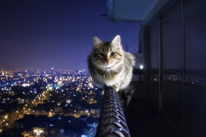 courageous cat  cool