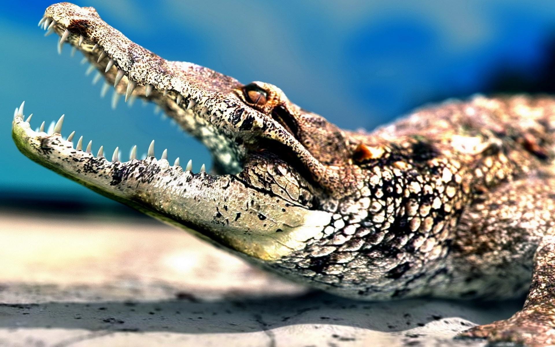 crocodile pc wallpaper
