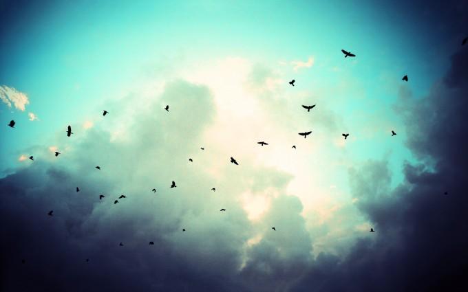 crows wallpaper