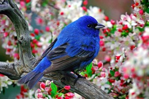 cute blue bird