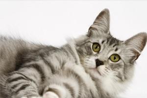 cute cat curious