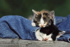 cute cat sleeping hd