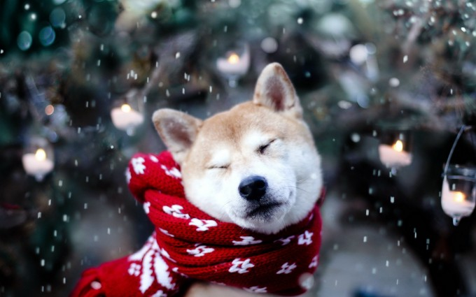 cute dog winter
