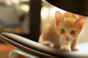 cute kitty kitten