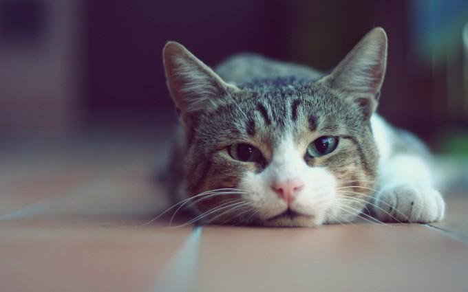 cute lazy cat girl