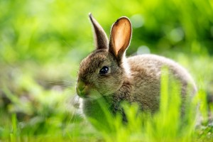 cute rabbit images