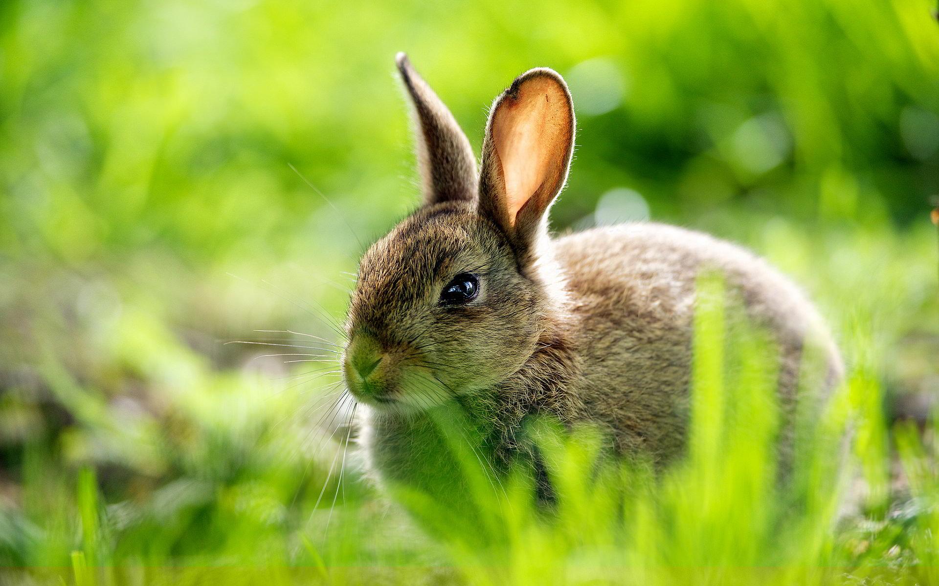 cute rabbit images
