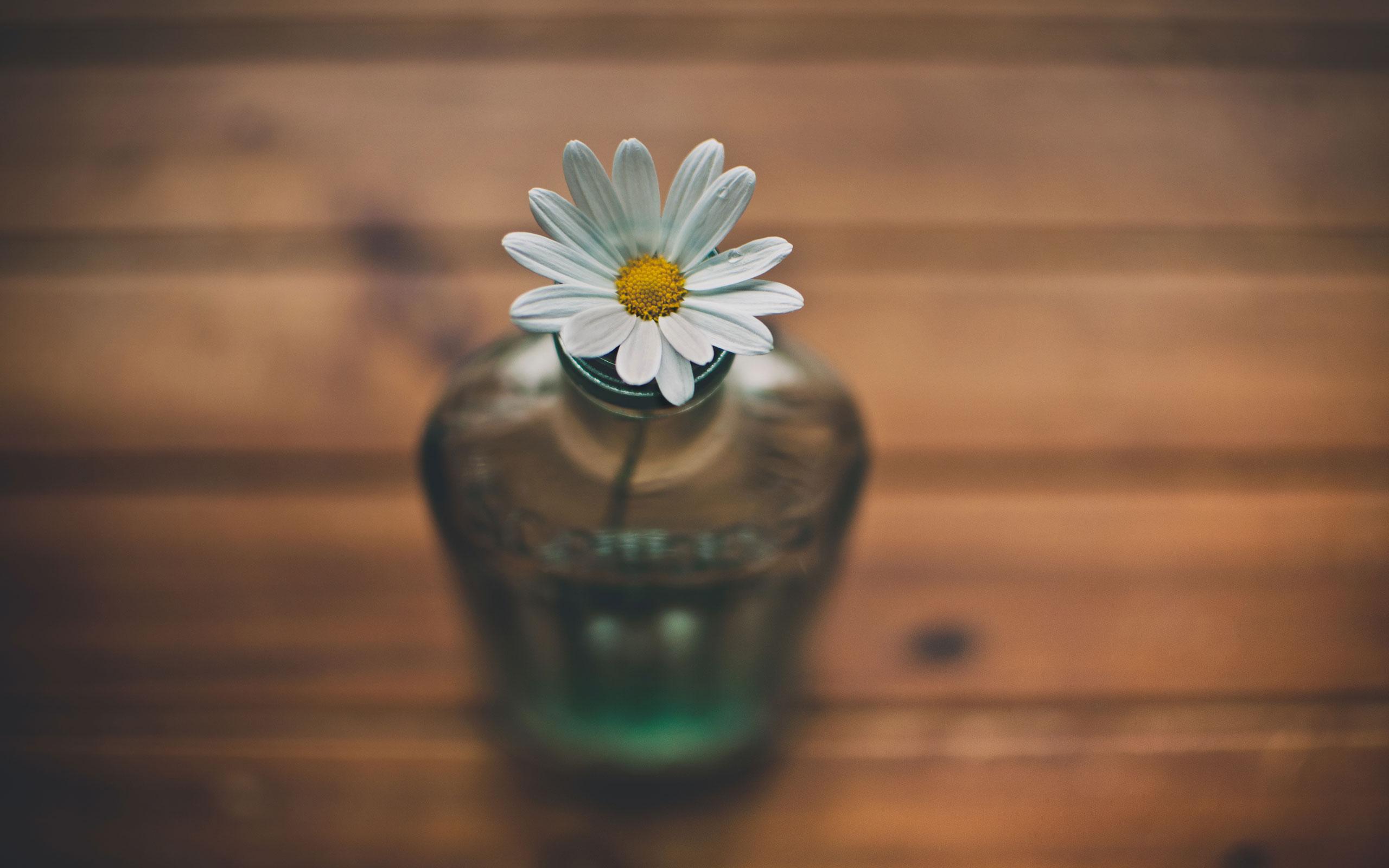 daisy bottle abstract