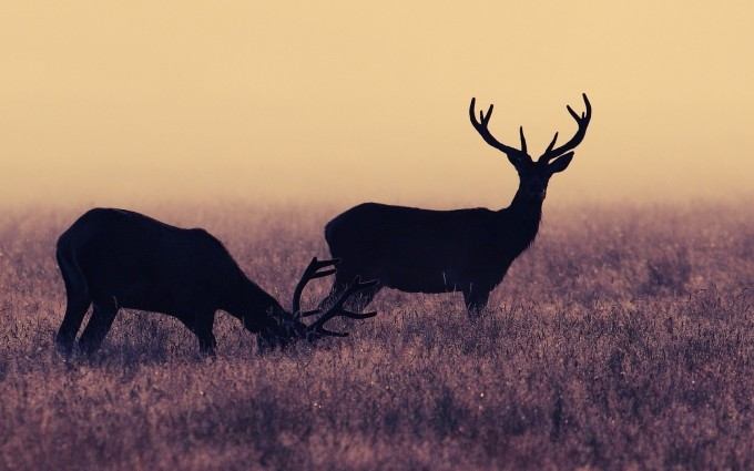 deer photography animals