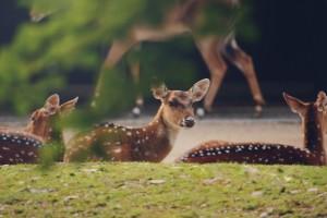 deer wild animals images