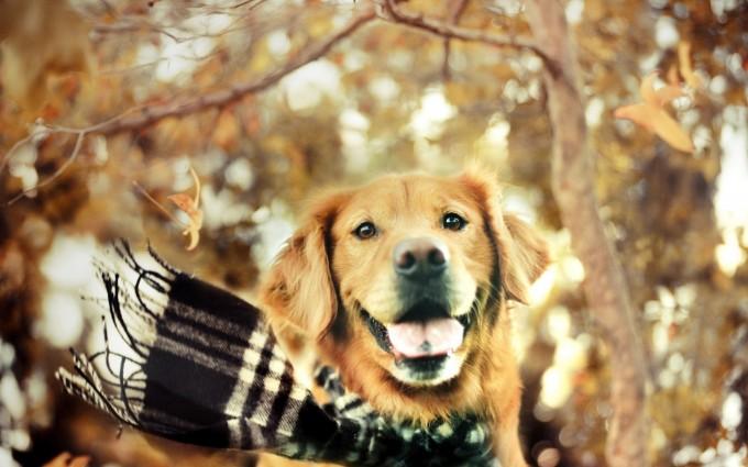 dog autumn beautiful