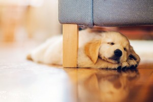 dog cute pup