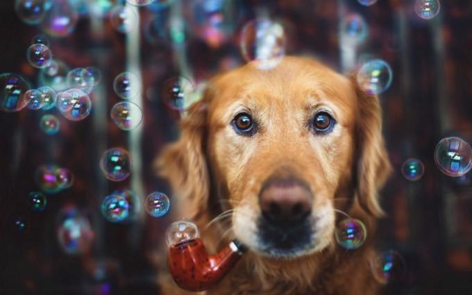 dog cute wallpaper hd