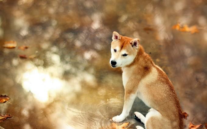 dog fall cute