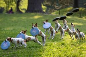 dog frisbee funny
