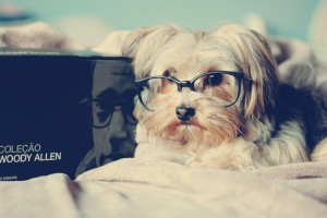 dog glasses funny