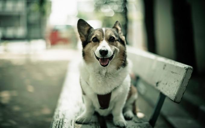 dog loyal for life