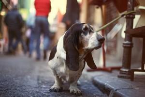 dog streets