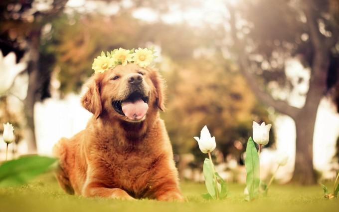 dog sunshine