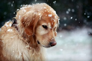 dog winter snow