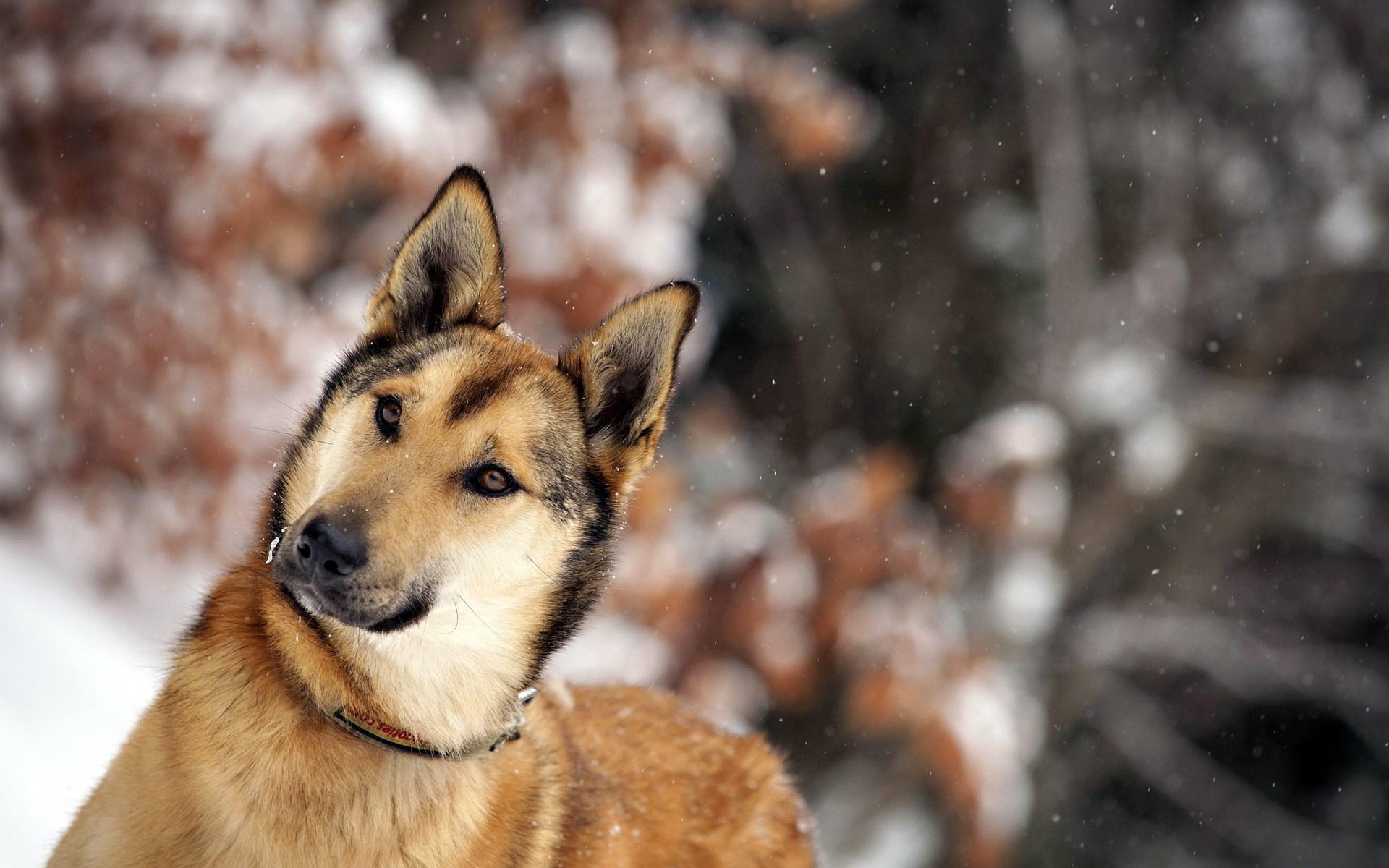 dog winter wallpaper